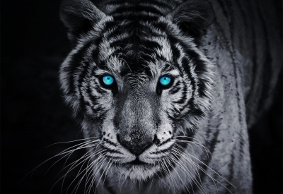 фототапет на хартия с тигър в черно