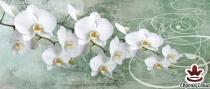 фототапет панел с прекрасни бели орхидеи на зелен фон