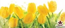 фототапет панел с прекрасни жълти лалета