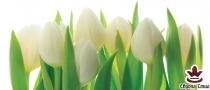 фототапет панел с прекрасни бели лалета